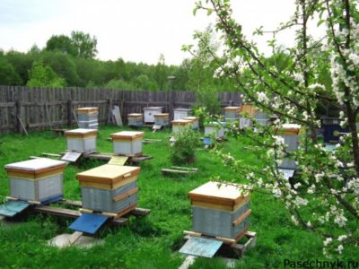 Пчелы на участке