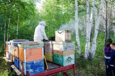Пчеловод и ульи