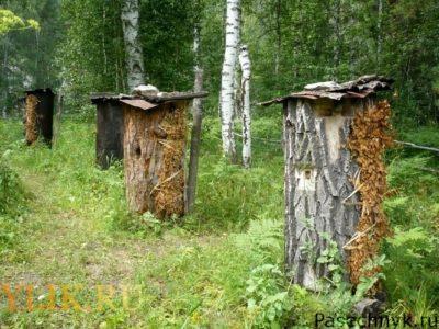 Улья бортевого пчеловодства
