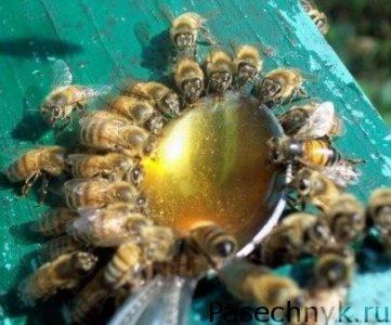 пчелы и ложка с сиропом