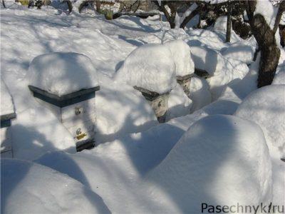 ульи под снегом