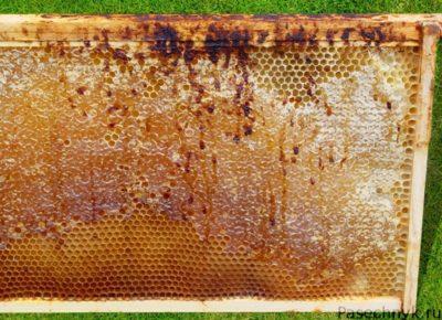 нозематоз пчел и рамка