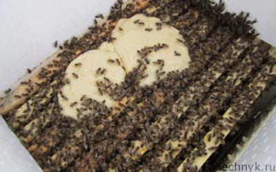 канди и пчелы