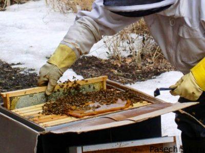 пасечник и пчелы