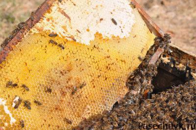 рамка и много пчел
