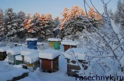 ульи в лесу под снегом