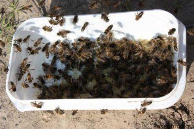 пчелы и кормушка