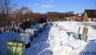 Выставка пчел из зимовника