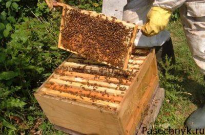 беглый осмотр пчел