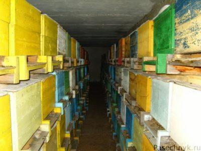пчелиные семьи в омшанике