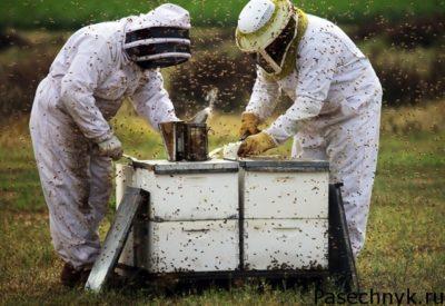 два пчеловода и ульи