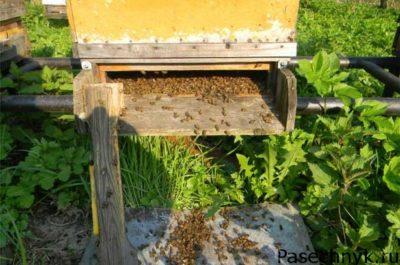 пчелы возле улья