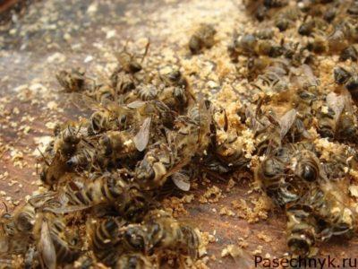 Смертность пчел