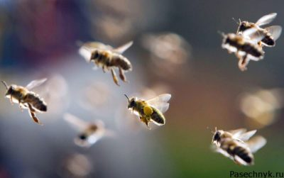 перелет пчел