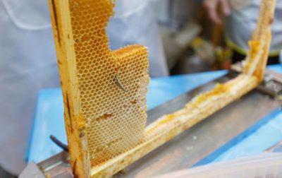 сотовый мед на рамке