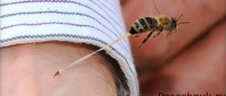 жало пчелы под микроскопом