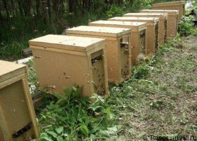 пчелопакеты в ряд