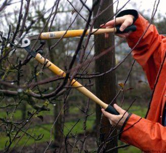 обрезка яблони инструментом
