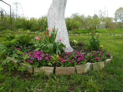 цветы возле яблони