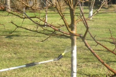опрыскивание ствола дерева