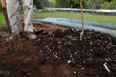 удобрения для яблони