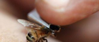 лечения пчелиным ядом