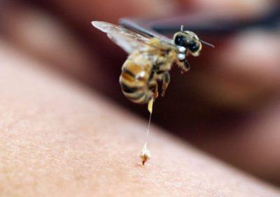 Пчёлы в медицине